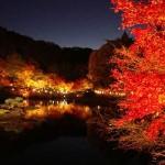【虹の郷】紅葉まつりライトアップイベントのお食事はこのはな亭でどうぞ!