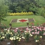 虹の郷 バラ園 画像